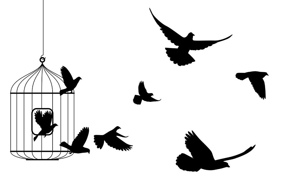 bluebird-about